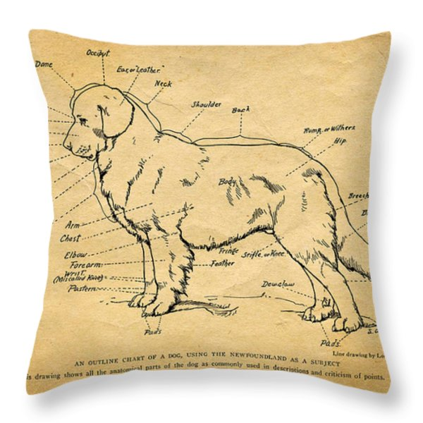 Doggy Diagram Throw Pillow by Tom Mc Nemar