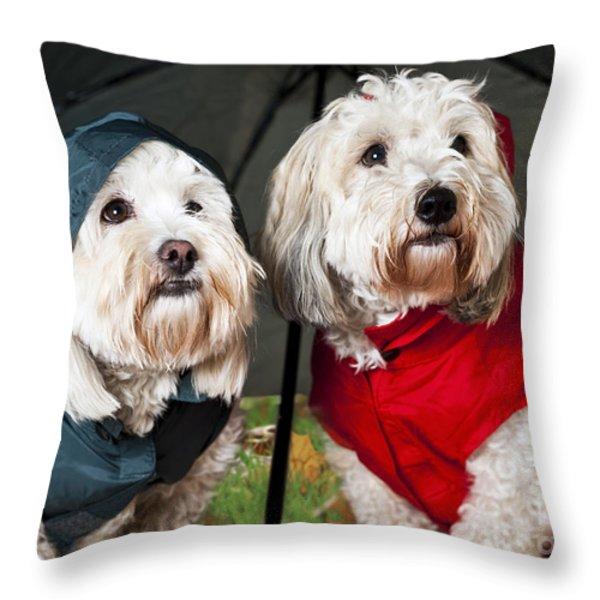 Dogs Under Umbrella Throw Pillow by Elena Elisseeva