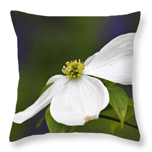 Dogwood Blossom - D001797 Throw Pillow by Daniel Dempster