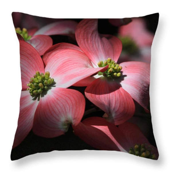 Dogwood Blossoms Throw Pillow by Donna Kennedy