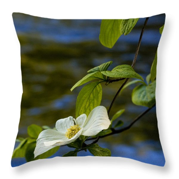 Dogwood on the Merced Throw Pillow by Bill Gallagher