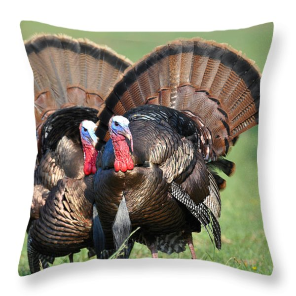 Double Trouble Throw Pillow by Todd Hostetter