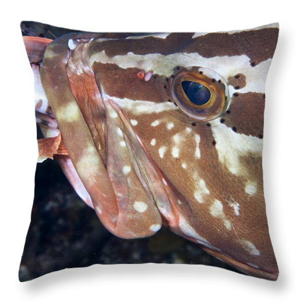 Down the Hatch Throw Pillow by Jean Noren