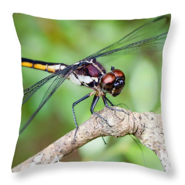 Dragonfly Throw Pillow by Dawna  Moore Photography