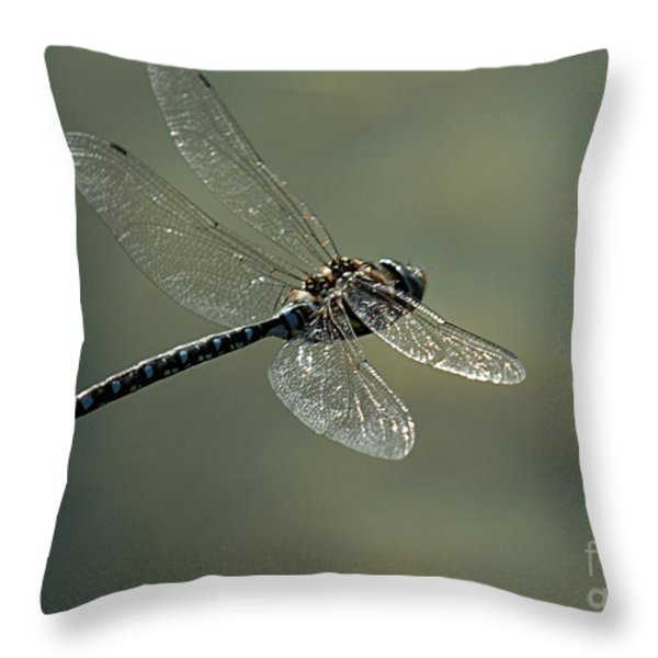 Dragonfly In Flight Throw Pillow by Bob Christopher