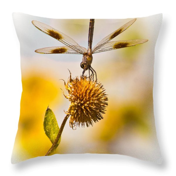 Dragonfly On Dead Bud Throw Pillow by Robert Frederick
