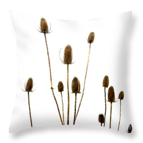 Dried Thistle Throw Pillow by Bernard Jaubert