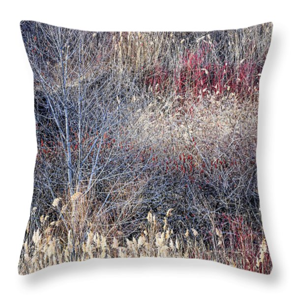 Dry grasses and bare trees Throw Pillow by Elena Elisseeva