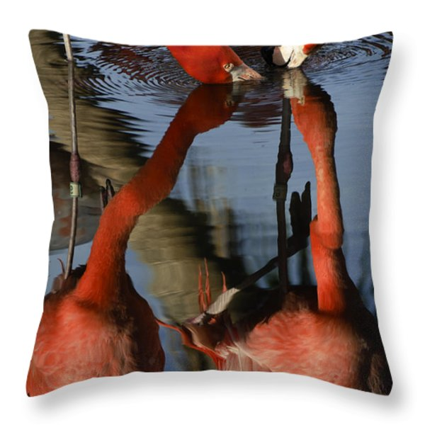 Dual Flamingo Reflections Throw Pillow by Dave Dilli