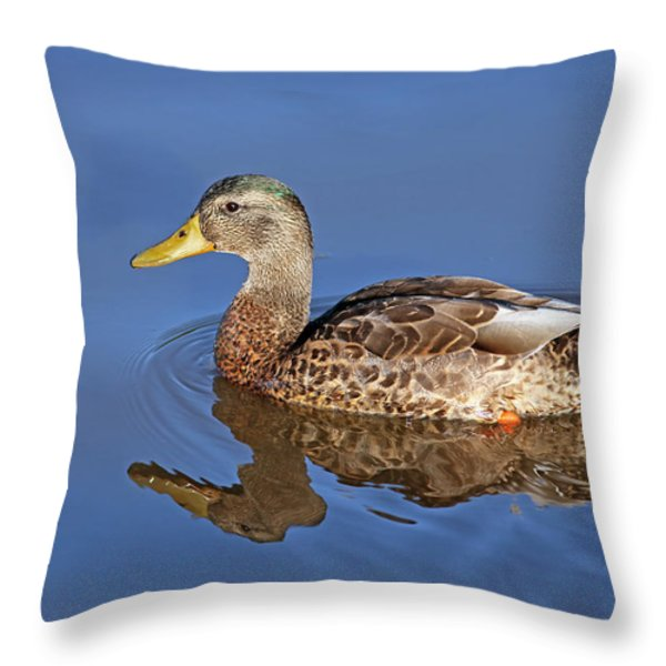 Duck Throw Pillow by Jim Nelson