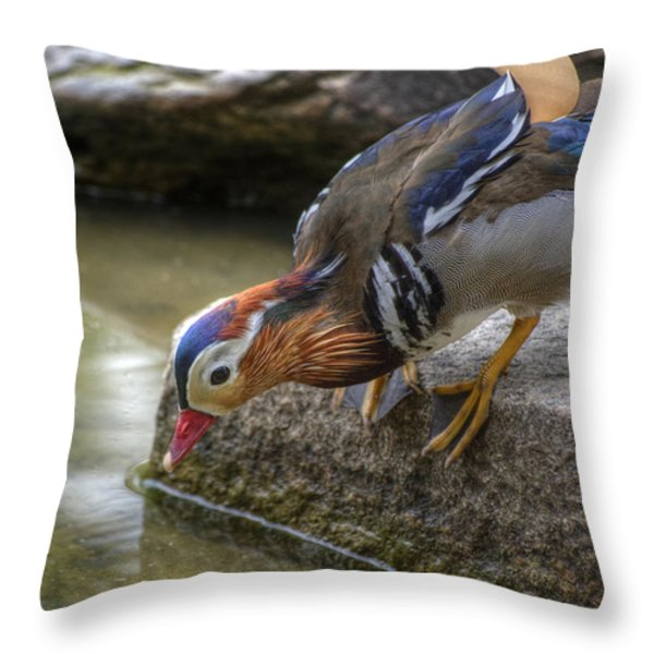 Duck On The Edge Throw Pillow by Agrofilms Photography