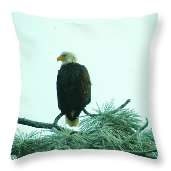 EAGLE ON A FROZEN PINE Throw Pillow by Jeff  Swan