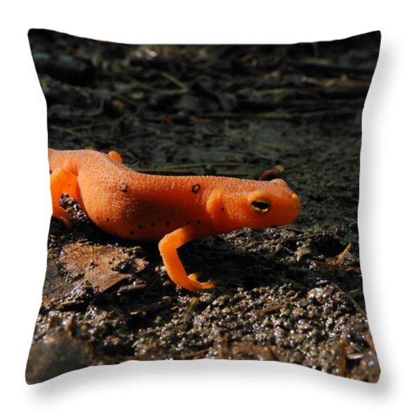 Eastern Newt Red Eft Throw Pillow by Christina Rollo