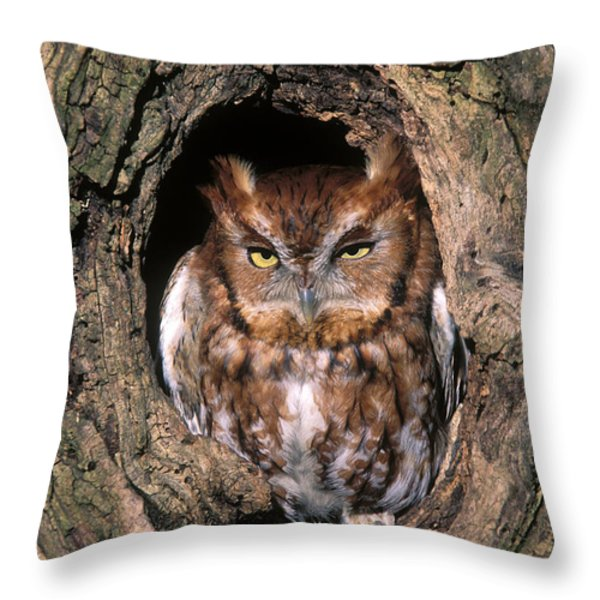 Eastern Screech Owl - FS000810 Throw Pillow by Daniel Dempster