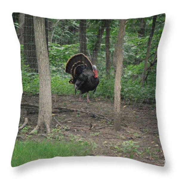 Eastern Tom Turkey Throw Pillow by Mark McReynolds