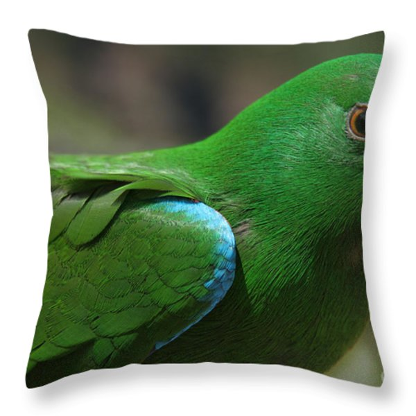 Eclectus Roratus Throw Pillow by Sharon Mau