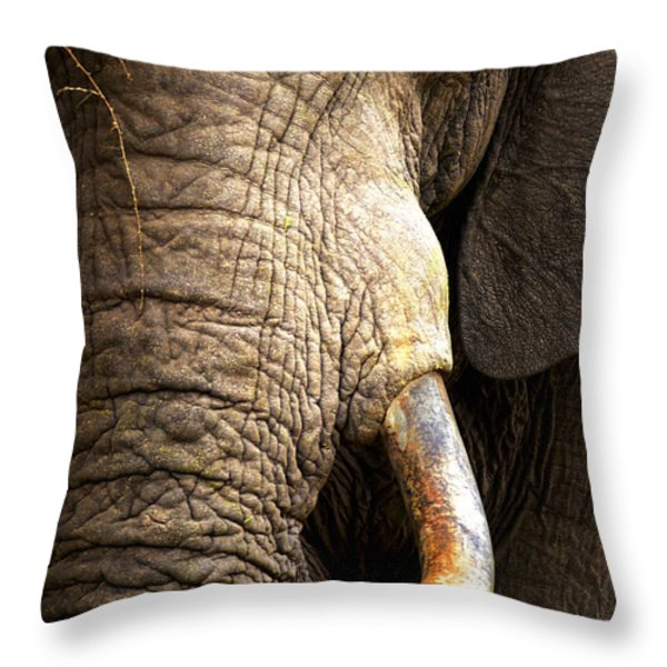 Elephant close-up portrait Throw Pillow by Johan Swanepoel