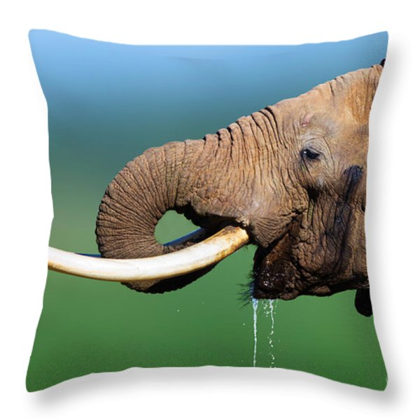 Elephant drinking water Throw Pillow by Johan Swanepoel