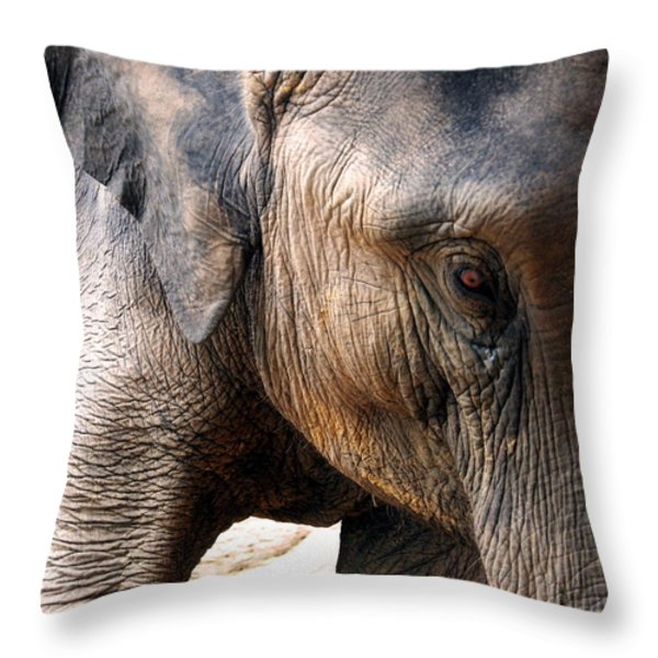 Elephant's Eye Throw Pillow by Justin Woodhouse