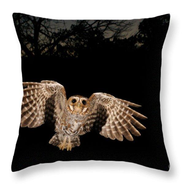 Elf Owl Throw Pillow by Scott Linstead