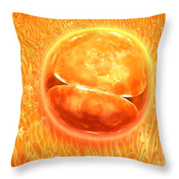Embryo Development 24-36 Hours Throw Pillow by Stocktrek Images