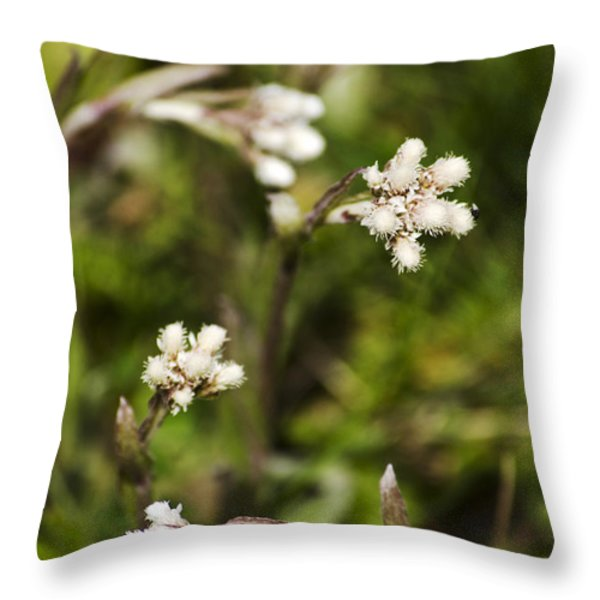 Everlasting Throw Pillow by Christina Rollo