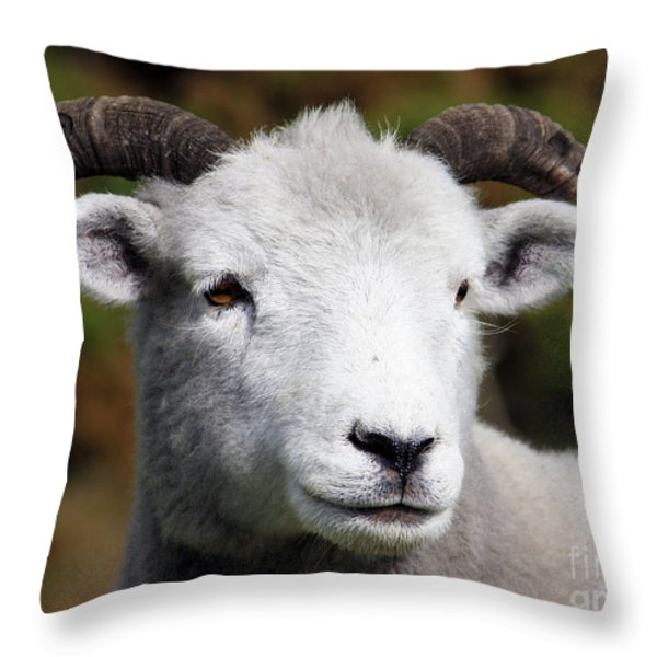 Exmoor Horn Sheep Throw Pillow by Terri  Waters