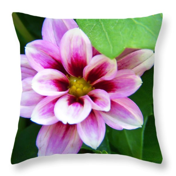 Exquisite Throw Pillow by Aimee L Maher Photography and Art