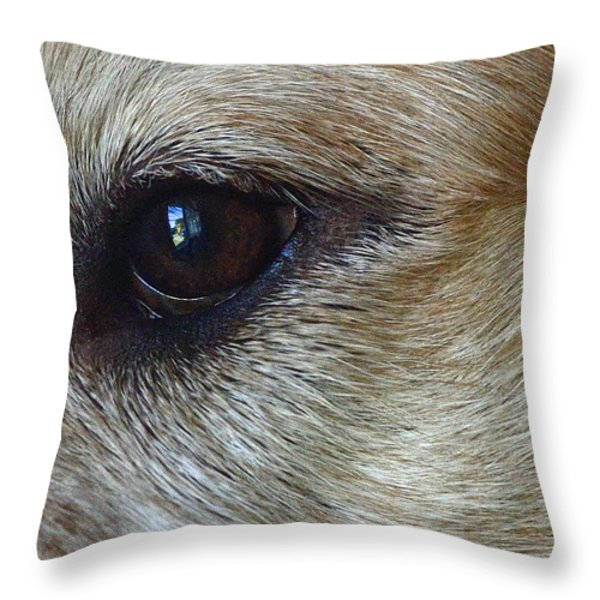 Eye See You Throw Pillow by Lisa  Phillips