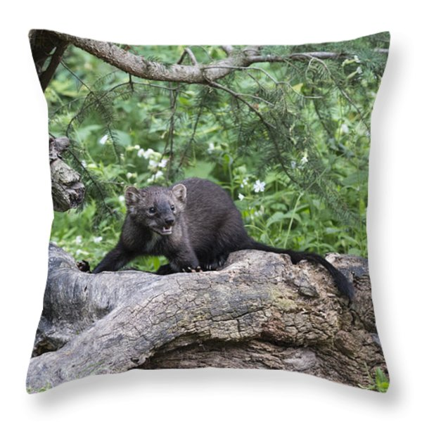 Eyes In The Forest Throw Pillow by Sandra Bronstein