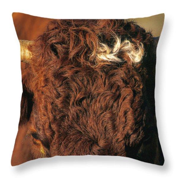 Face of a cow salers. Auvergne . France Throw Pillow by BERNARD JAUBERT
