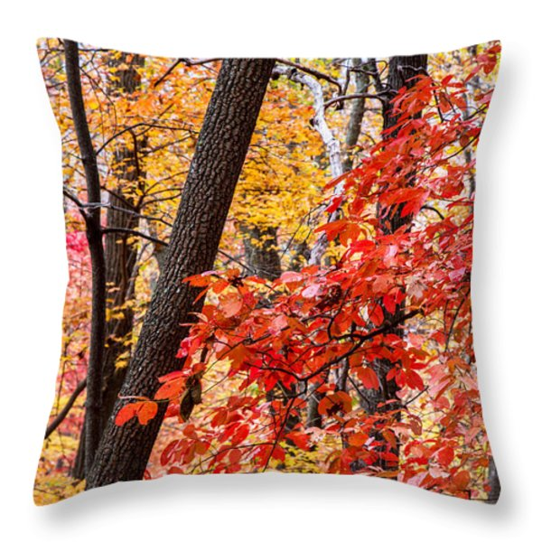 Fall In The Forest Throw Pillow by John Haldane