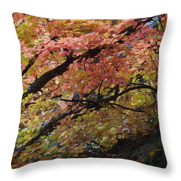 Fall Leaves At West Fork Arizona Throw Pillow by Dave Dilli