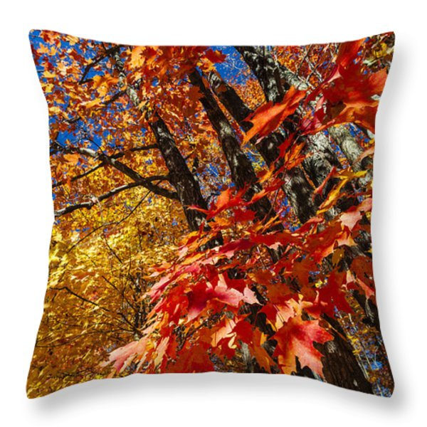 Fall Maple Forest Throw Pillow by Elena Elisseeva