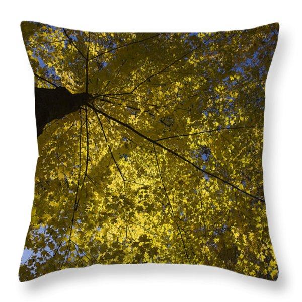 Fall maple Throw Pillow by Steven Ralser