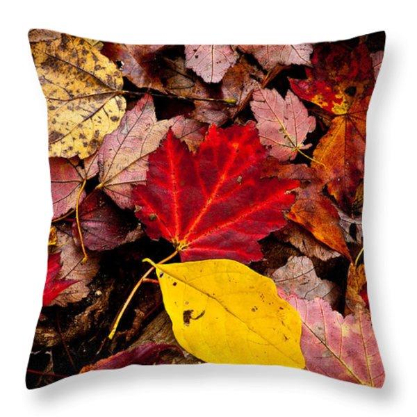 Fallen Throw Pillow by Karol  Livote