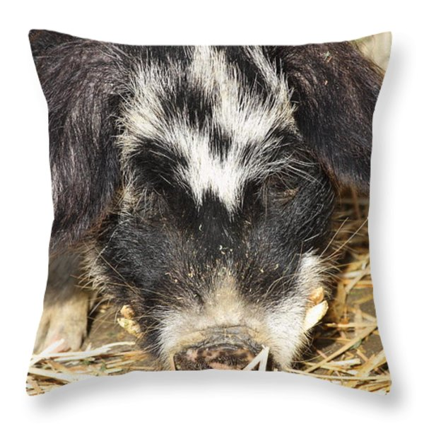 Farm Pig 7D27361 Throw Pillow by Wingsdomain Art and Photography