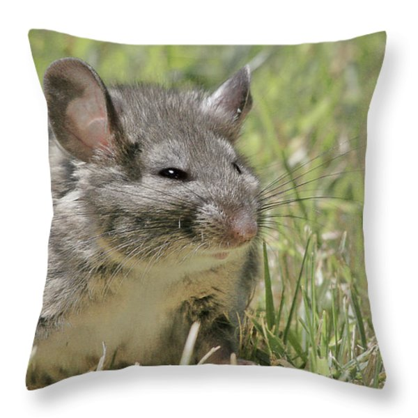 Fat Norway Rat Throw Pillow by Christine Till