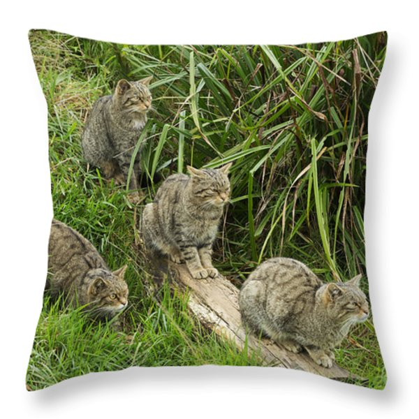 Feeding Time Throw Pillow by Louise Heusinkveld