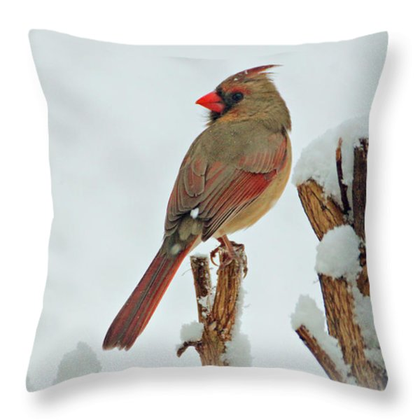 Female Cardinal in the Snow Throw Pillow by Sandy Keeton