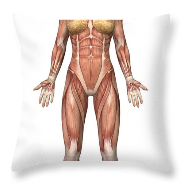Female Muscular System, Front View Throw Pillow by Stocktrek Images