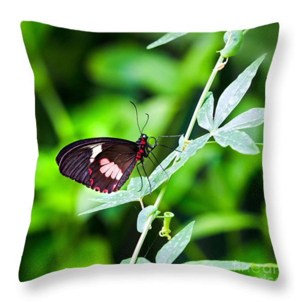 Female Pink Cattleheart butterfly Throw Pillow by Jane Rix