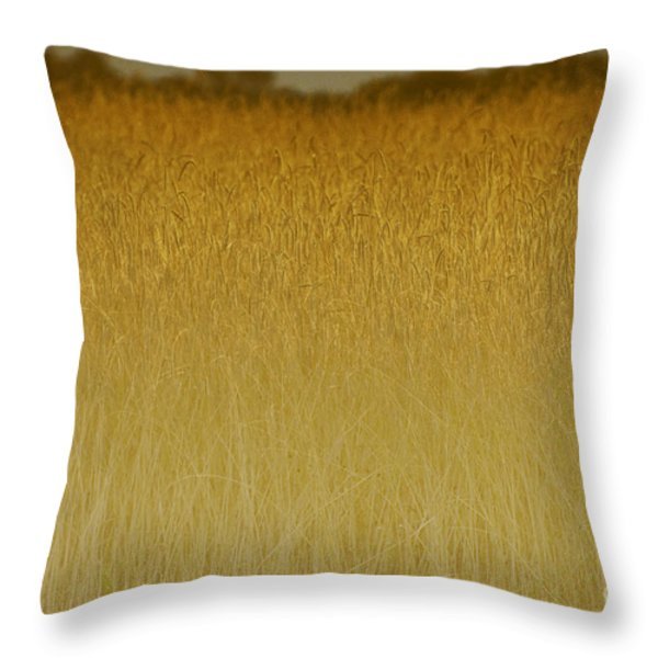 Fields Of Gold Nature Abstract Throw Pillow by Anahi DeCanio