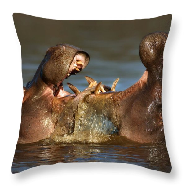 Fighting Hippo's Throw Pillow by Johan Swanepoel