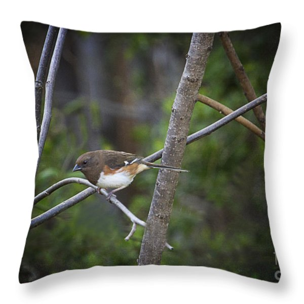 Finding A Mate Throw Pillow by Cris Hayes