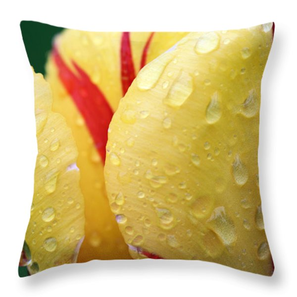 Fire Throw Pillow by JC Findley