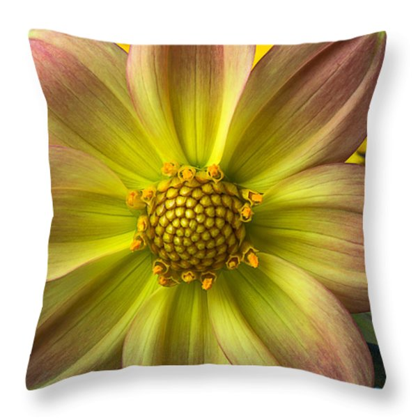 Fireworks Dahlia Throw Pillow by Garry Gay
