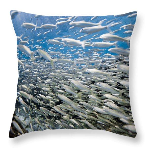 Fish Freeway Throw Pillow by Sean Davey