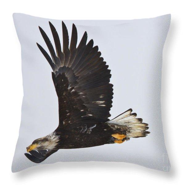 Flight Throw Pillow by Mike  Dawson