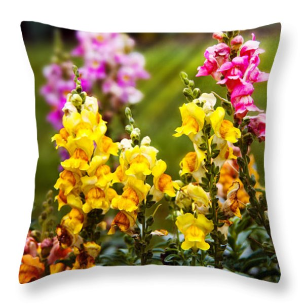 Flower - Antirrhinum - Grace Throw Pillow by Mike Savad